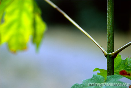 Macro photograph showing drops of water coating the stem of a plant and leaf highlights against a soft blurry background
