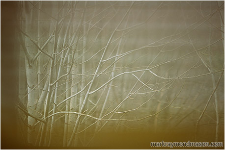 Abstract photograph of bent alder trees behind blurred venetian blinds