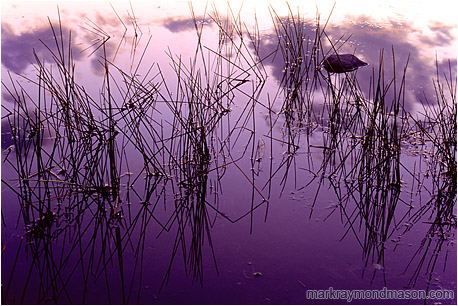 Fine art photograph of rocks, reeds and reflections in a calm pond