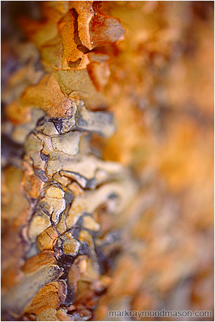 Abstract fine art photograph showing waves of blurry, multi-coloured pine bark