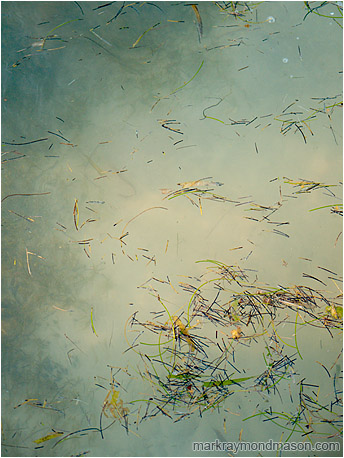 Abstract photograph showing pieces of seagrass floating on translucent green ocean water