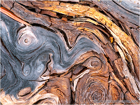 Abstract macro photograph of colourful twisting patterns in a aged, fallen log