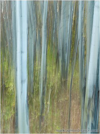 Abstract photograph of a motion-blurred forest, with lines and texture where the camera paused