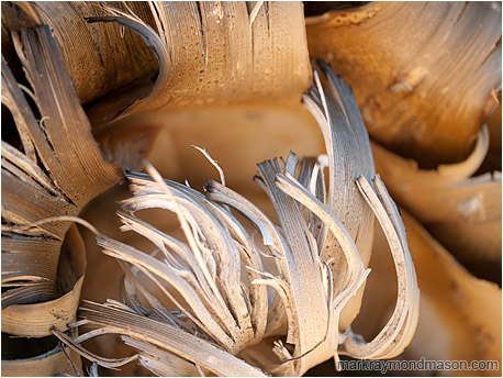 Abstract photo of yucca bark, dried and curled upwards like flames