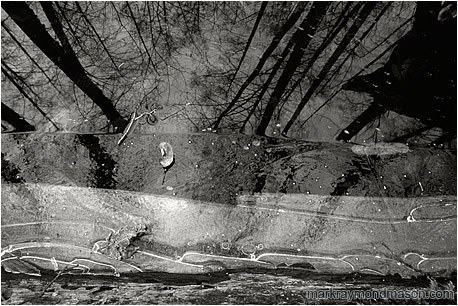 Abstract black and white photograph of a partly frozen pool of water, floating leaves, and reflections of the forest and sky