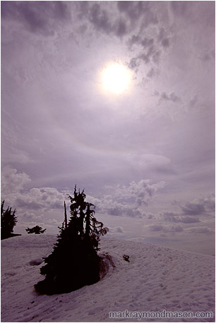 Fine art photograph of an eclipsed sun, swirling clouds, and trees in the snow