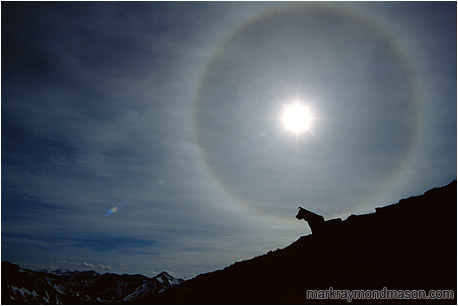 Lifestyle photo showing the silhouette of a dog against a dramatic solar halo and distant mountain ranges