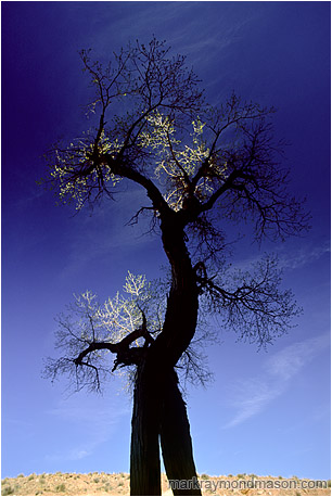 Abstract nature photograph of a twisted tree trunk and highlighted leaves against a dark blue sky