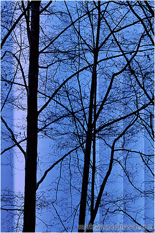 Abstract photograph showing tree branches silhouetted against blue concrete grain silos