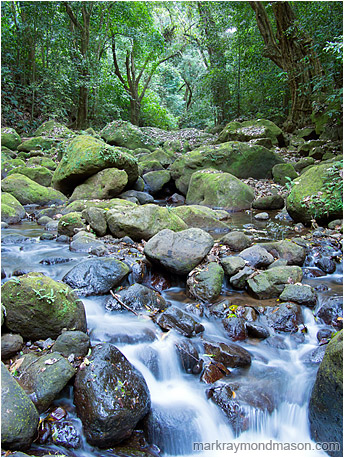 Fine art nature photograph of mossy river rocks and fallen debris surrounded by a dense, leafy jungle