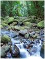 Rocky River, Jungle: Near Atenas, Costa Rica