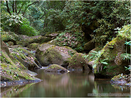 Fine art photograph showing reflections of rich jungle in the smooth water of a lazy, rocky creek