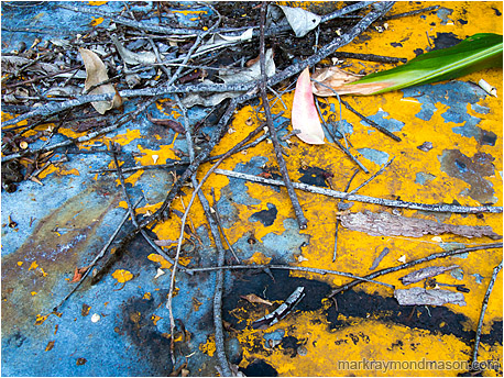 Fine art macro photo of scattered leaves covering the top of an old abandoned grader hood