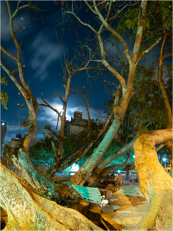 Arching Tree, Sleeping Figure, Moonlight: Havana, Cuba (2017-02-13) - Fine art photography showing a sleeping homeless person under the wild branches of a street tree and moonlit clouds