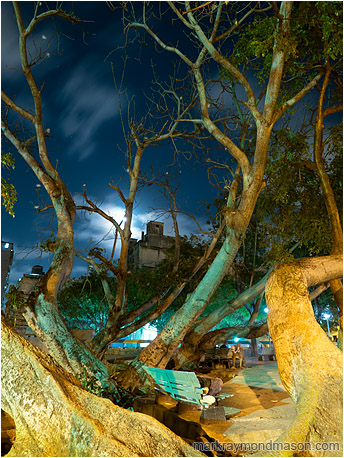 Fine art photography showing a sleeping homeless person under the wild branches of a street tree and moonlit clouds