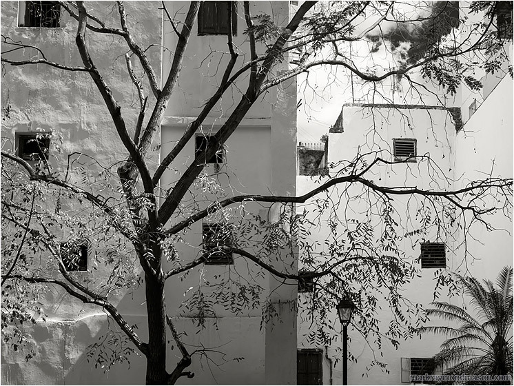 Courtyard, Reaching Tree: Havana, Cuba (2017-02-19) - Fine art photo in black and white, showing a bright white inner city courtyard and a silhouetted tree, angled sunlight playing over the imperfections in the masonry