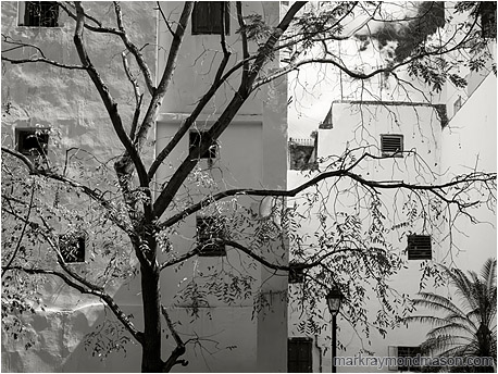 Fine art photo in black and white, showing a bright white inner city courtyard and a silhouetted tree, angled sunlight playing over the imperfections in the masonry