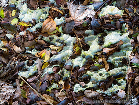 Fine art photo showing leaf litter filling the potholes in a pockmarked slab of rain-rinsed limestone