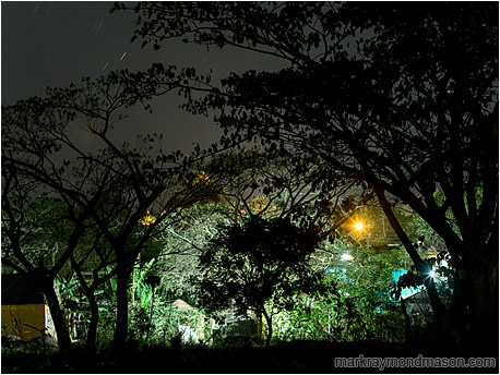 Fine art photograph showing streetlights shining through a silhouetted forest at the edge of the city
